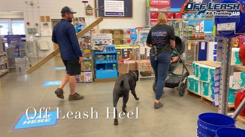 Off Leash Heel