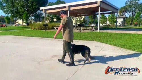 OLK9 Dog Training