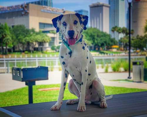 dog standing near park